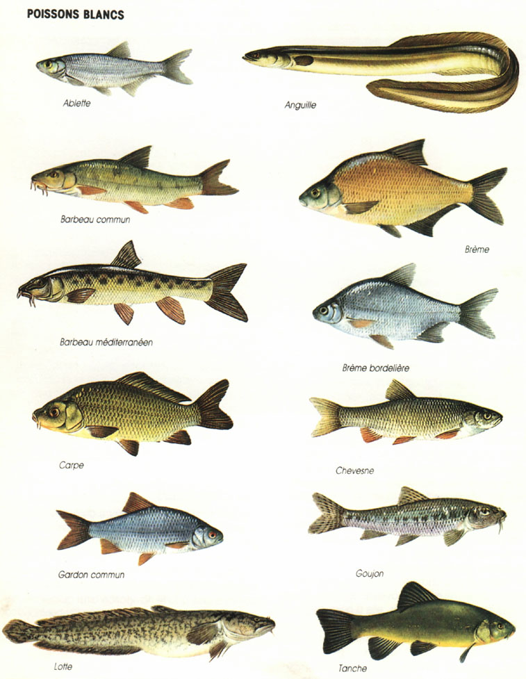 sorte des poissons